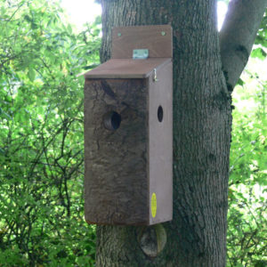 Red_Squirrel_Nesting_Box