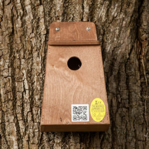 Small_Bird_Nest_Box_on_tree