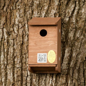 Sparrow_nest_box